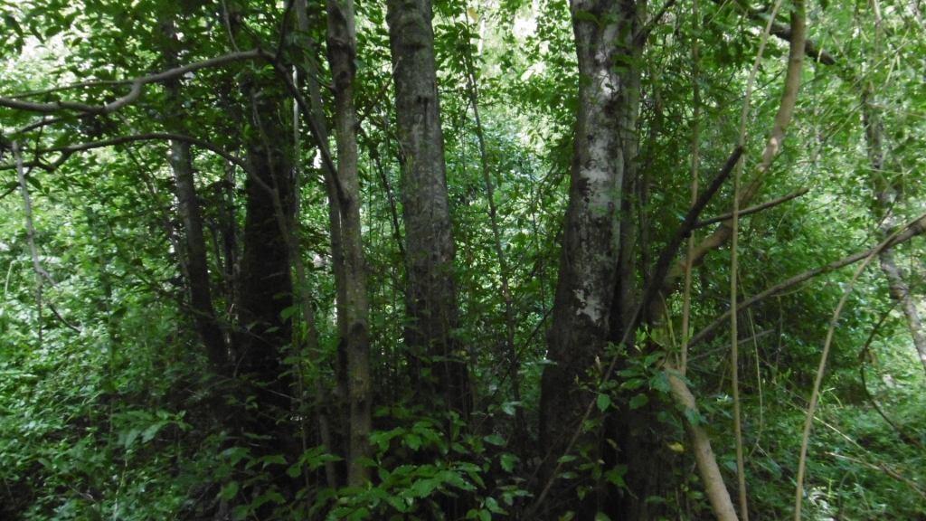 los árboles son santuarios
