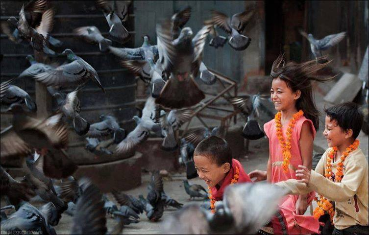 Childrens encounter with birds too magical for words