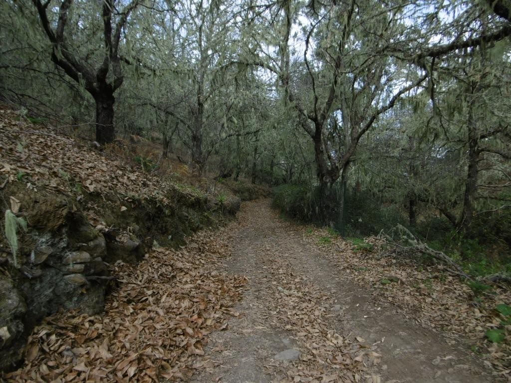 preciosa caminata otoñal